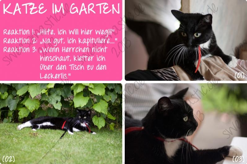 katze_im_garten-jpg